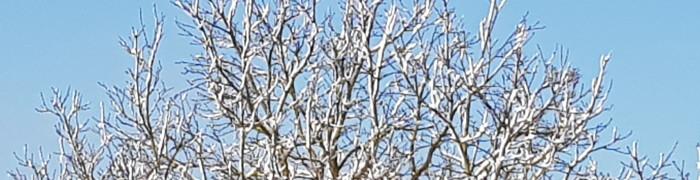 winterbaum700_180.jpg