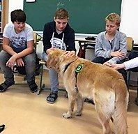 therapiehund12.jpg