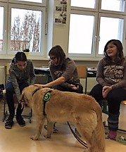 therapiehund2.jpg